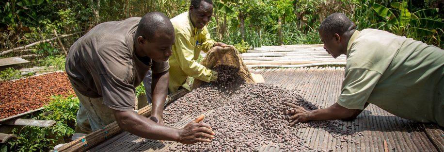 Chocolade Cocoa Horizons